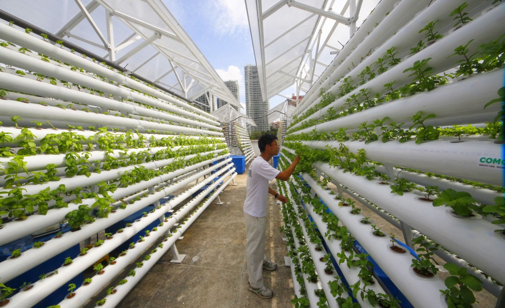 Vertical Farming The Latest Trend For Producing Food