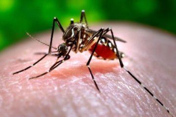 google track dengue