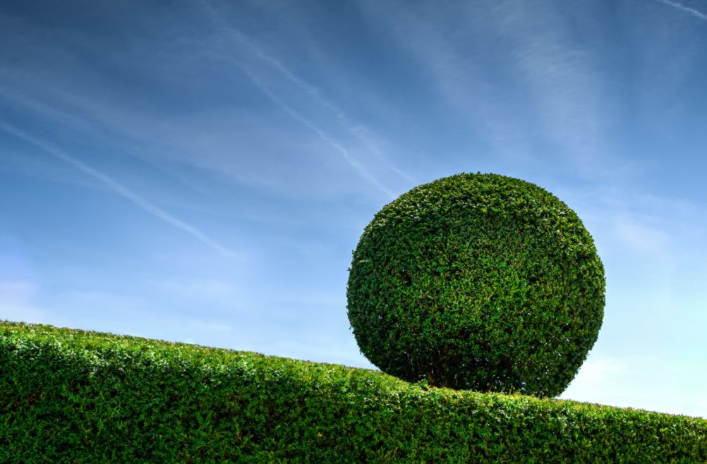 hedge your decisions in leading a startup