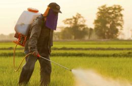 India Pesticides