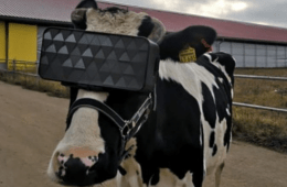 If Cows Are Fitted With VR Goggles & Virtual Sent To A Relaxing Place Can Help To Increase Milk Production