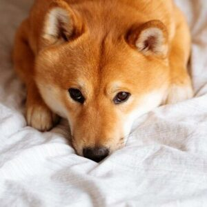 Dogecoin prices fall