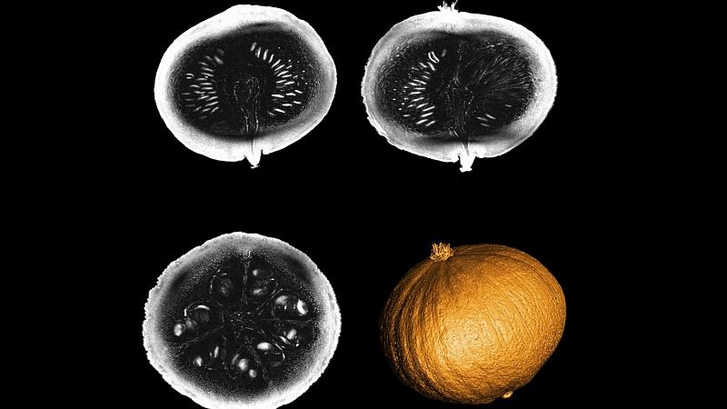World's most powerful MRI scanner delivers its first images - from inside a pumpkin. -